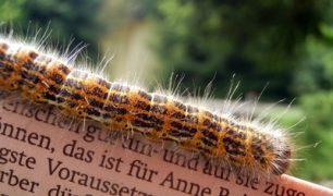Duitse boeken